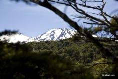 mountain-trees