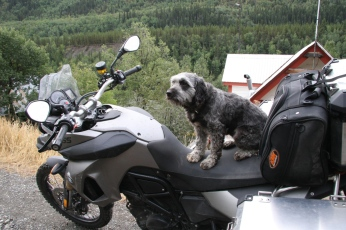 F800GS for the dogs? No, but it is more dirt-bike than adventure.
