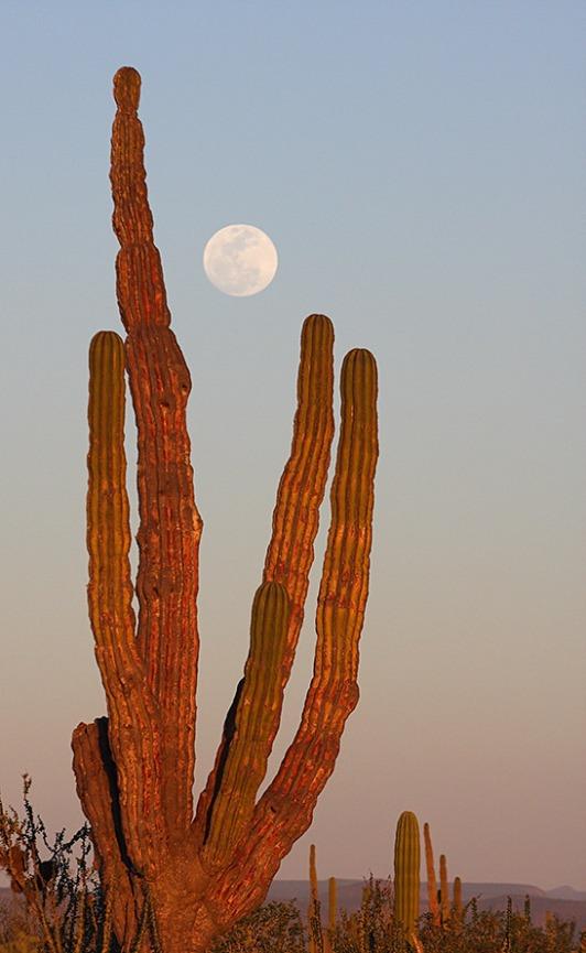 San-Ignacias-Sunset-Cactus-Full-Moon